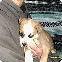 Adopt A Pet :: Sundance - Dundas, VA