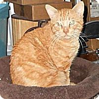 Adopt A Pet :: Mitch - College Station, TX