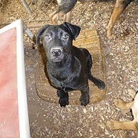 Adopt A Pet :: Bea - Katy, TX