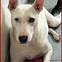 Adopt A Pet :: Bella - Queen Creek, AZ