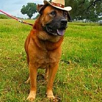 Adopt A Pet :: Nero - Simsbury, CT