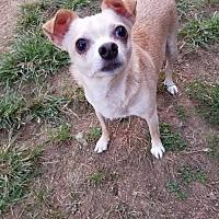 Adopt A Pet :: Charlie - Fairmont, WV