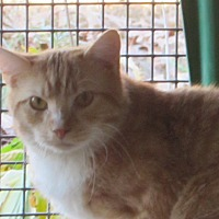 Adopt A Pet :: Phillip - Jackson, MO