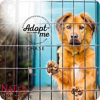 Adopt A Pet :: Chase - Bradenton, FL