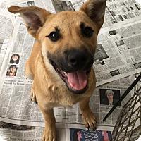 Adopt A Pet :: Kandy - Doylestown, PA