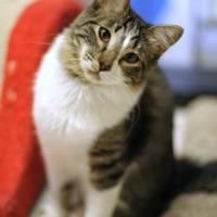 Adopt A Pet :: Chaneka - Encinitas, CA