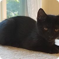 Adopt A Pet :: Belle - Millersville, MD