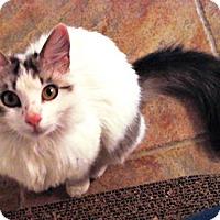 Adopt A Pet :: Rose - Castro Valley, CA