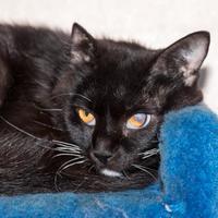 Adopt A Pet :: Zena - Fernandina Beach, FL