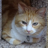 Adopt A Pet :: Dude - Atascadero, CA