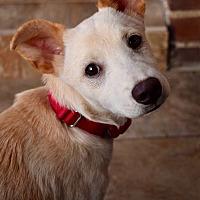 Adopt A Pet :: Michael - LONG ISLAND CITY, NY