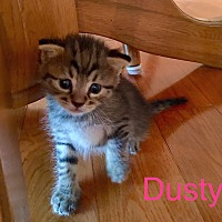 Adopt A Pet :: Dusty - Sneads Ferry, NC