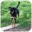 Photo 2 - Hound (Unknown Type)/Shepherd (Unknown Type) Mix Dog for adoption in Sacramento, California - Cona