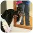 Photo 3 - Rottweiler Mix Dog for adoption in Cincinnati, Ohio - Bruce