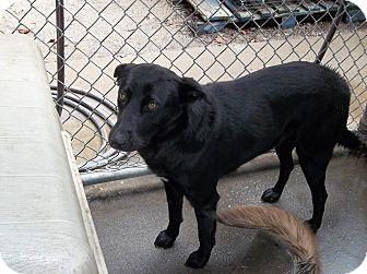 Shepherd (Unknown Type) Mix Dog for adoption in Henderson, North Carolina - Adriana