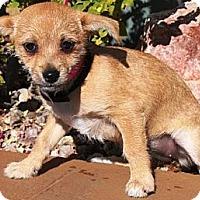 Adopt A Pet :: Wendy - Gilbert, AZ