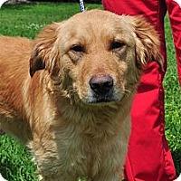 Adopt A Pet :: Reggie - New Canaan, CT