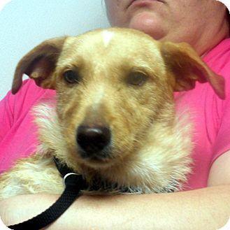 Terrier (Unknown Type, Medium) Mix Dog for adoption in Greencastle, North Carolina - Brenda