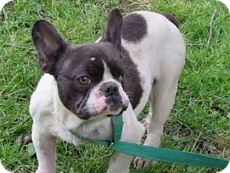 French Bulldog Dog for adoption in Columbus, Ohio - Wally