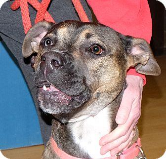 Shepherd (Unknown Type) Mix Dog for adoption in Spokane, Washington - Skye