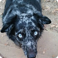 Adopt A Pet :: Bogle - Harrisonburg, VA