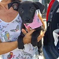 Adopt A Pet :: Bonnie - Brea, CA