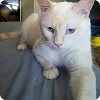 Adopt A Pet :: Nacho - Phoenix, AZ
