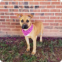 Adopt A Pet :: Stormy - Lexington, NC