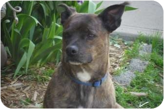 Terrier (Unknown Type, Small) Mix Dog for adoption in Covington, Kentucky - Charlie
