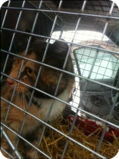 Domestic Shorthair Cat for adoption in Edmonton, Alberta - Matilda