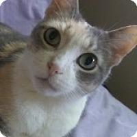 Adopt A Pet :: Inara - Chicago, IL