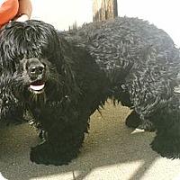 Adopt A Pet :: Cole - cedar grove, IN
