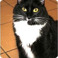 Adopt A Pet :: Tux - Naples, FL