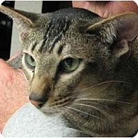 Adopt A Pet :: Cammie - Davis, CA