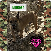 Adopt A Pet :: Buster Brown - Fowler, CA