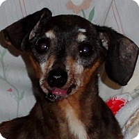 Adopt A Pet :: Snickers - Loveland, CO