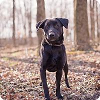 Adopt A Pet :: Jedd - Lewisville, IN