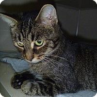 Adopt A Pet :: Piper - Hamburg, NY