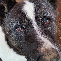 Adopt A Pet :: Charlene - Kingsland, TX