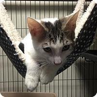 Adopt A Pet :: Evan - Orlando, FL