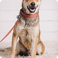 Adopt A Pet :: Adam - Portland, OR