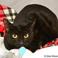 Adopt A Pet :: Schrodinger - Neenah, WI