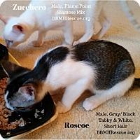 Adopt A Pet :: Roscoe - Temecula, CA