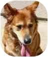 Retriever (Unknown Type) Mix Dog for adoption in San Diego, California - Shawney