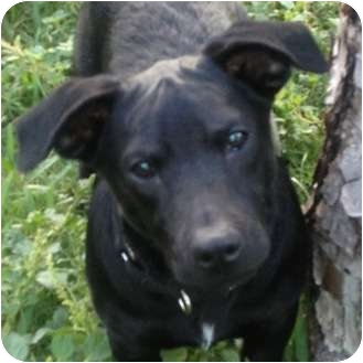 Jack Russell Terrier/Hound (Unknown Type) Mix Dog for adoption in West Palm Beach, Florida - MURPHY
