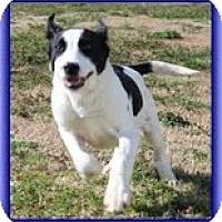 Adopt A Pet :: Hansel - Staunton, VA