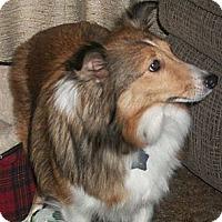 Adopt A Pet :: Penny - Minneapolis, MN