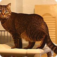Adopt A Pet :: Callie - Lombard, IL