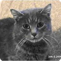 Adopt A Pet :: Mickey D's Momma - Syracuse, NY