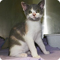 Adopt A Pet :: Fancy - Dover, OH